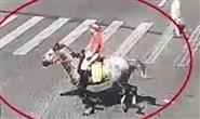 马路就是骑马的路?男子骑马飞奔上班被交警约谈