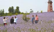 迁安:滦河故道沙荒地变成百亩花海、千亩桃园