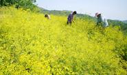 公司+合作社+农户!丰润中药材种植开辟增收新路径