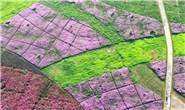 唐山:工业废弃地变身花海田园