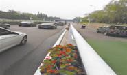 路南区城管局对岳各庄桥两侧进行立体绿化提升