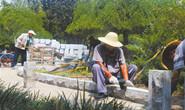 路南区城管局对辖区进行绿化改造提升