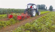 年产值达2.5亿元!丰润规模化种植高产优质花生