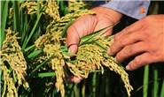 新华社聚焦|滦南县水稻种植区加强田间管理促丰收