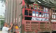 河北交管通报10起交通违法案例