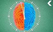 外媒:睡眠对大脑健康至关重要 不打瞌睡你就输了