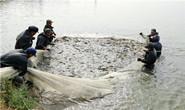 组图|丰南:鱼跃虾跳话丰收