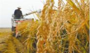 组图|唐山:金秋水稻飘香