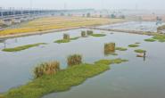 新华社聚焦|丰南:生态混养 蟹肥稻香