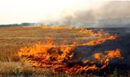 河北省生态环境厅公开8起秸秆垃圾露天焚烧违法典型案例