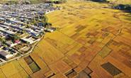 组图|滦州:水稻丰收 遍地金黄
