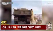 冰川消融,饥饿的北极熊打劫垃圾车