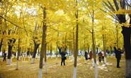 唐山:城市秋景美如画