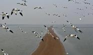 滦南:南堡嘴东湿地迎来迁徙候鸟