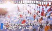 视频|心旷神怡!初冬太平湖似天空之镜