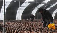 新华社聚焦   滦州:特色种植助农冬闲增收