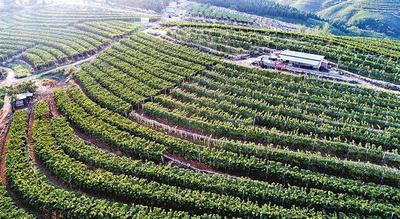 唐山:做优农业品牌 助力农民增