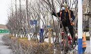 唐山园林部门组织绿化工人沿路修剪树枝